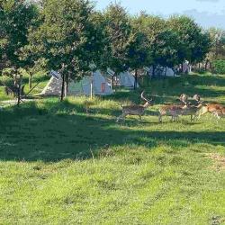 Teepee village Tatanka | Safari Park
